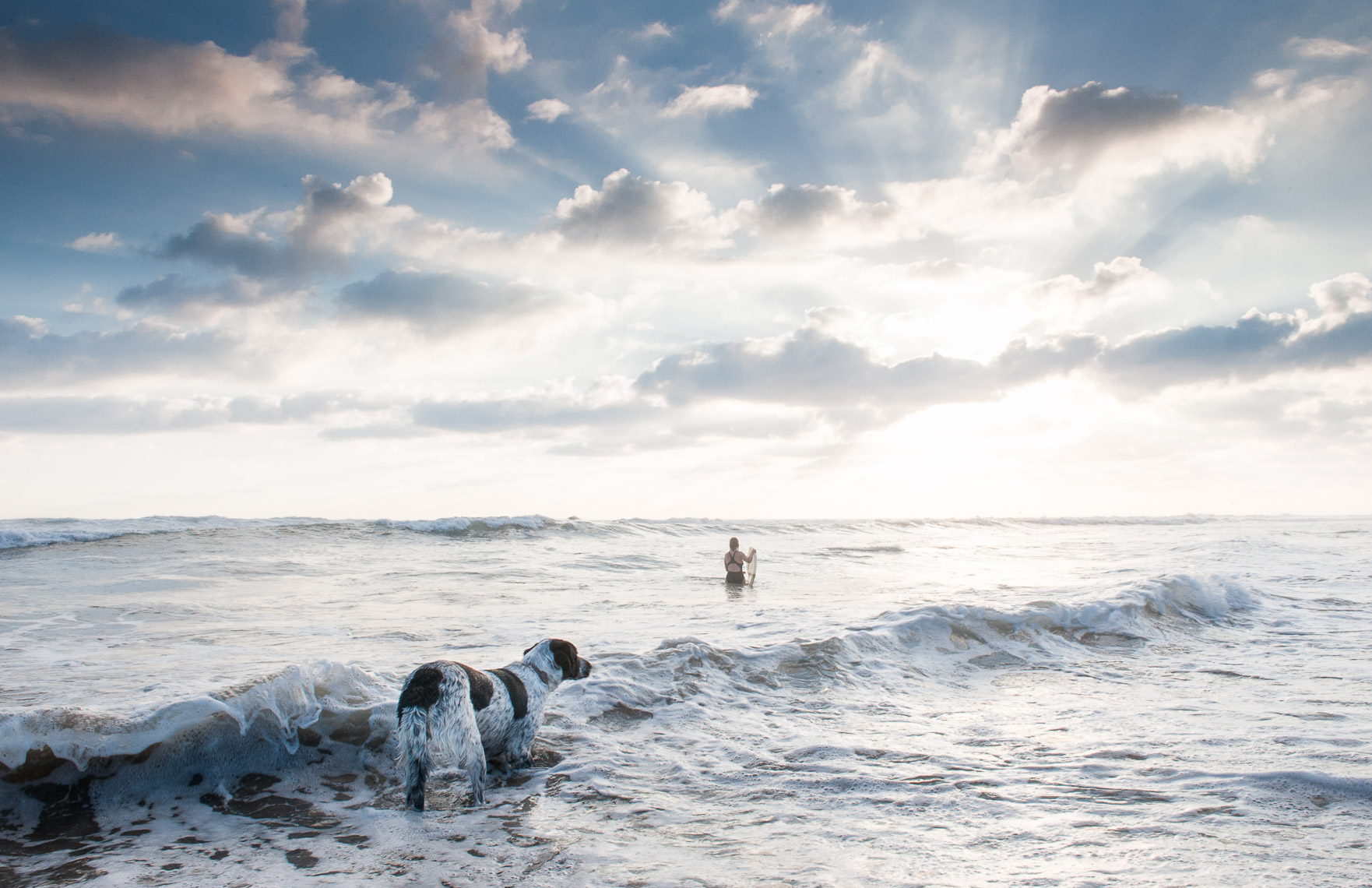 Kevin Steele - A dog looks out toward a woman in the surf